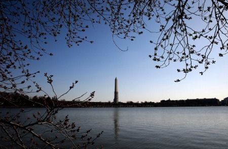 Long, Cold Winter Delays Start Of DC Cherry Blossom Season