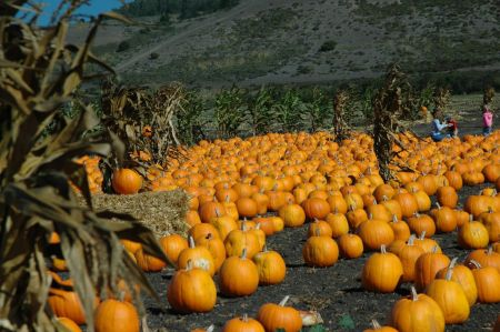 Pumpkin_Patch